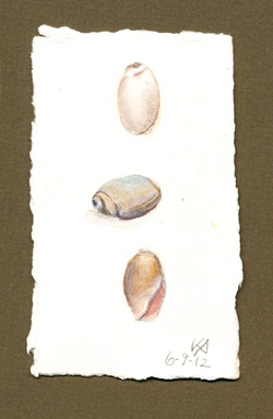 Olive seashells: an Open Studio Demonstration