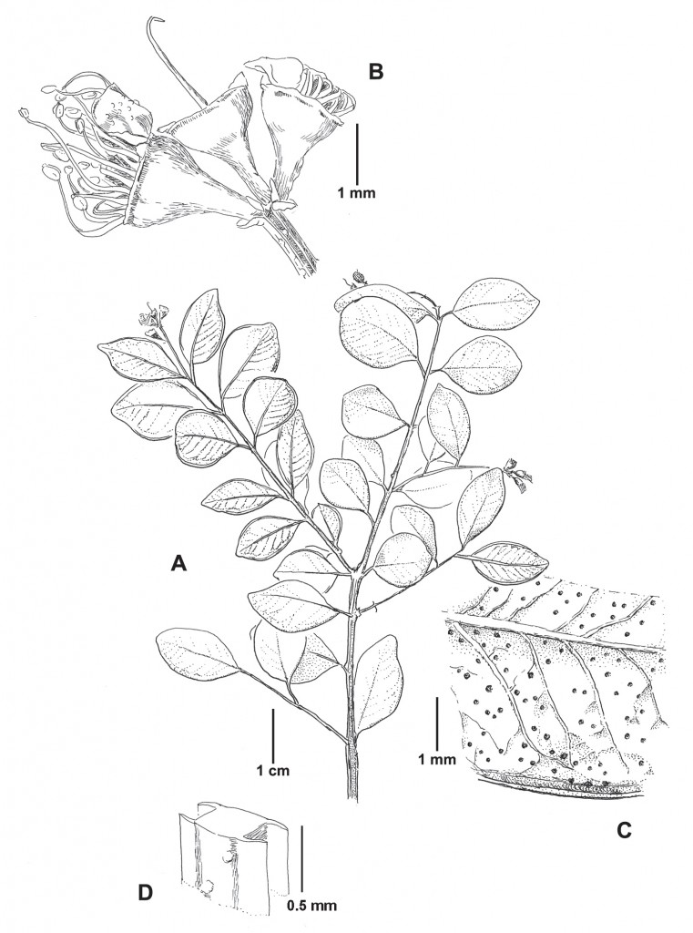 Harvard Papers in Botany