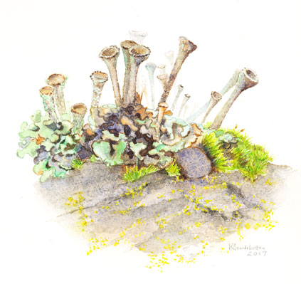 Lichen Watercolor